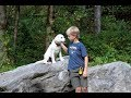 Labrador Retriever Puppy Training - Search and Rescue Foundation Part Two
