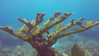 Tulum Scuba Diving - Coral Reef