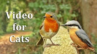 Videos for Cats to Watch - Birds on The Fence Extravaganza