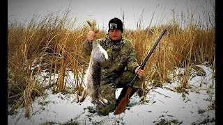 Охота на зайца. Тропление зайца  по первому снегу. Необычная находка. Сезон 2017 - 2018. Иж-43