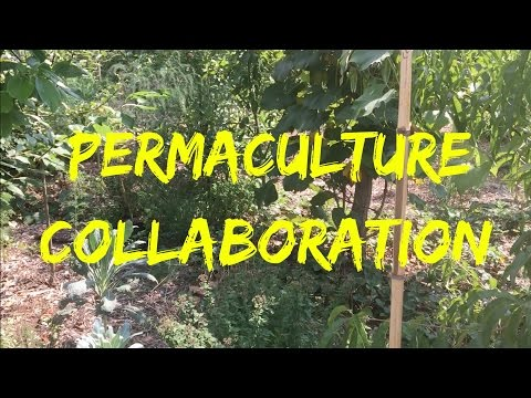 Permaculture Homestead Collaboration