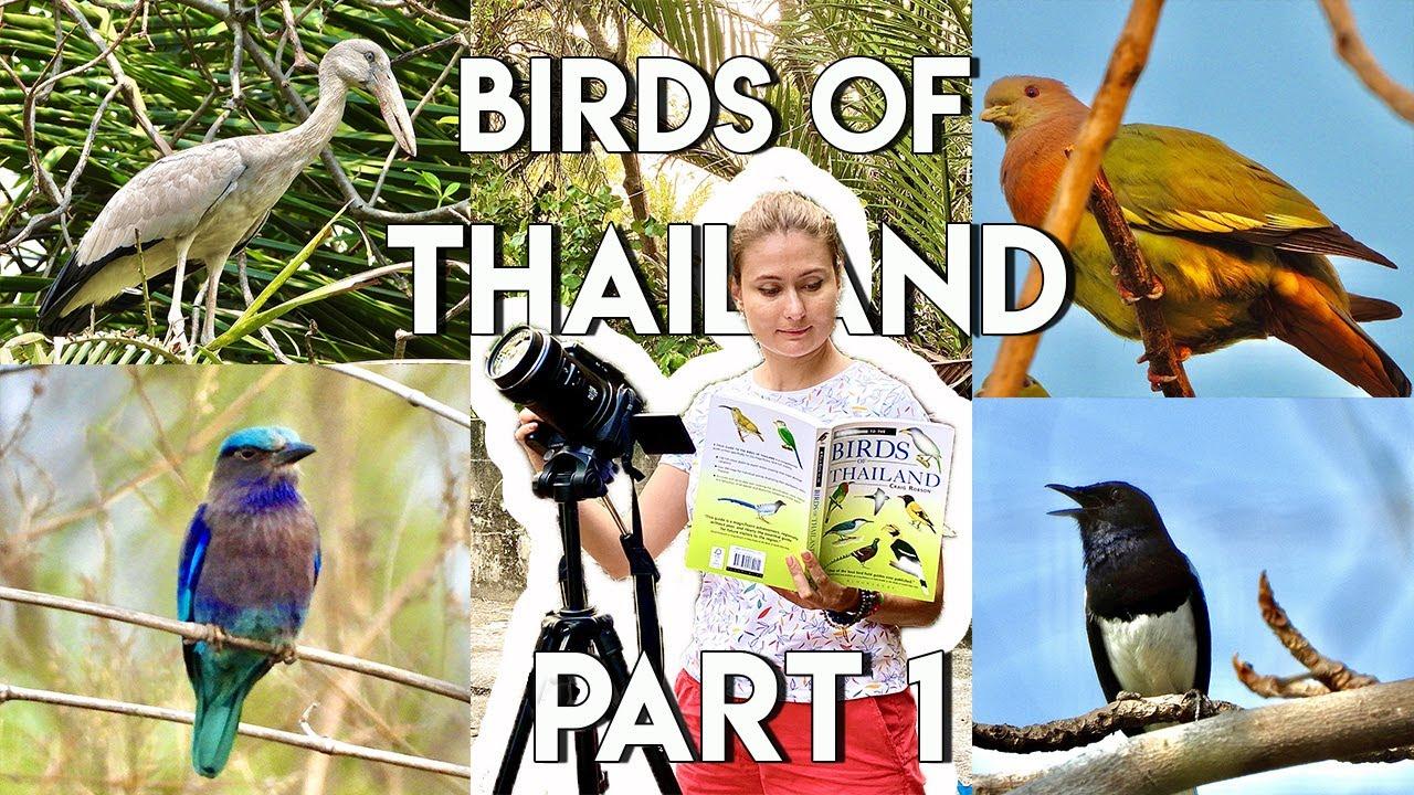 🔴 Birds of Thailand. Part 1 นกแห่งประเทศไทย |Nature| Wildlife |Birds |Nathalie's World