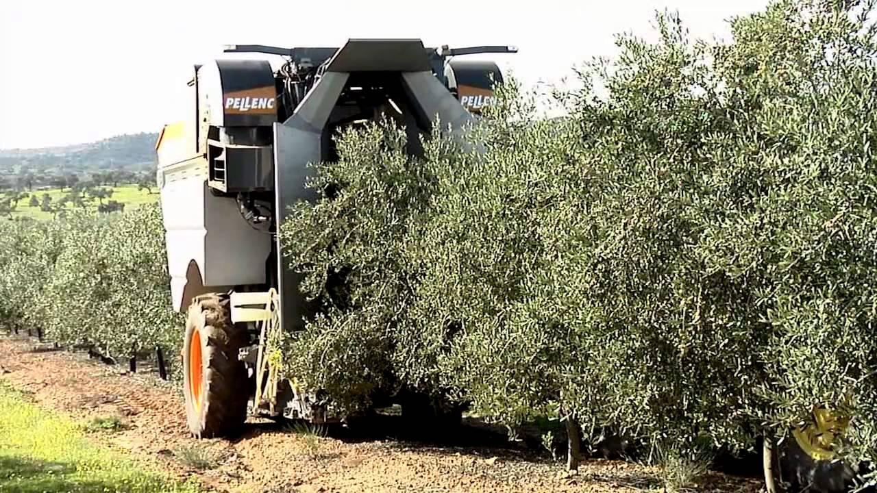 Socoopec machine pour la r colte des olives tract e - Machine pour ramasser les pommes ...