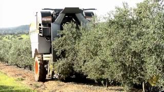 SOCOOPEC Machine pour la récolte des olives tractée PELLENC CV5045