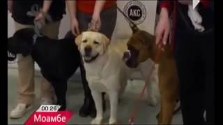 ТОП-10 Самых Популярных Пород Собак В США