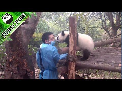 Panda bite - photo#45