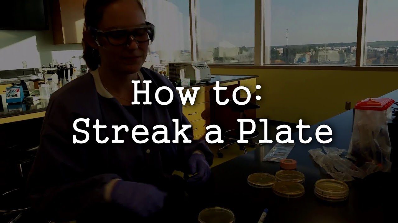 9ccc4864059 How To  Streak A Plate or Petri Dish - YouTube