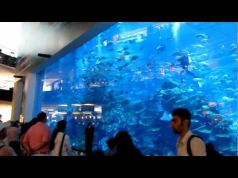 Mall of the emirates aquarium Аквариум в Дубаи.MOV