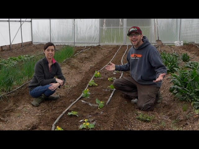 They DESTROYED our GREENHOUSE Last Year!! So THIS Year we have a FEW TRICKS up Our SLEEVES