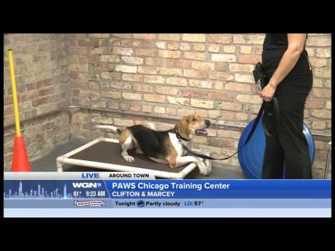 WGN Around Town at the PAWS Chicago Training Center