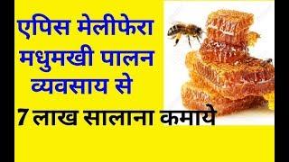 Madhumakhi palan business information in hindi