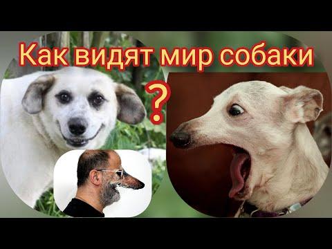 Как видят мир собаки?