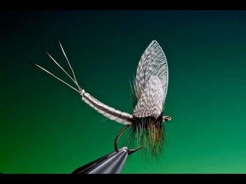 Tying Extended Mayfly Body Tutorial With Barry Ord Clarke