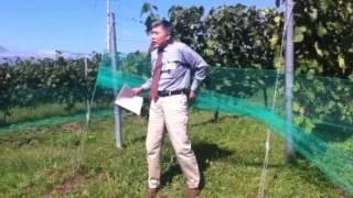 2013年9月29日 グレイス塾にて垣根甲州葡萄の説明です。