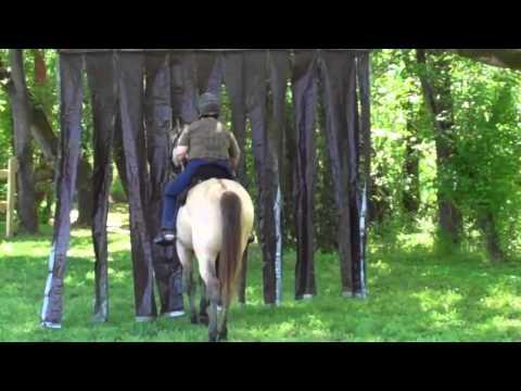 Koonz(Sharon-Suede-cowboy-curtain)