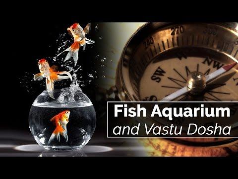 Fish Aquarium And Vastu Dosha