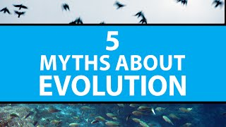5 Common Myths About Evolution | Mashable