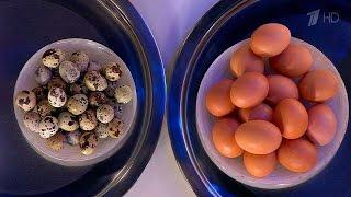 Жить здорово! Перепелиные яйца против куриных. (28.04.2016)