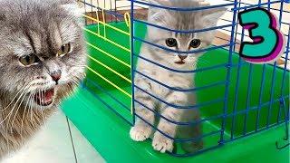 Спасение котенка. Что скрывает странный дом? Кот Макс и Собака Алиса в поиске