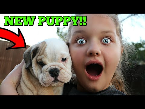 Christmas Puppy Surprise! Aubrey Gets CUTE Bulldog Puppy Dog!