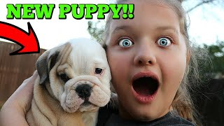 Christmas Puppy Surprise! Aubrey Gets CUTE Bulldog Puppy Dog!