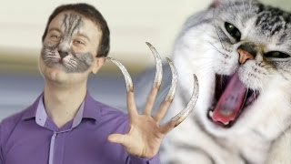 Зачем кошки царапают своего хозяина?