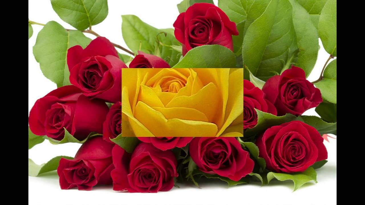 rosas lindas con simone rocha feliz aniversario productora kikito