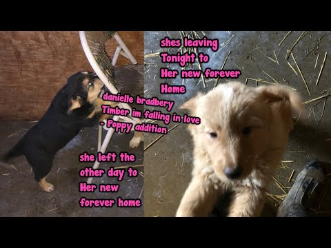 Danielle Bradbery - Timber I'm falling in love - Puppy addition