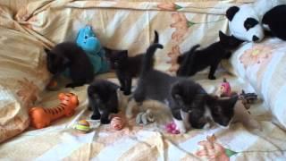 Котята: 6 недель