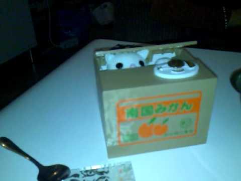 Katze In Einer Box Spardose Cat In A Box Kitten Youtube