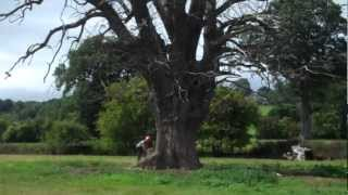 Bryn cutting down large oak  tree!.mp4