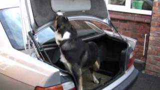 Ziggy: Cheshire Police's Latest Police Dog Recruit - Video 5