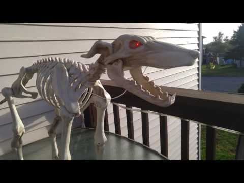 Skeleton greyhound meets the real deals