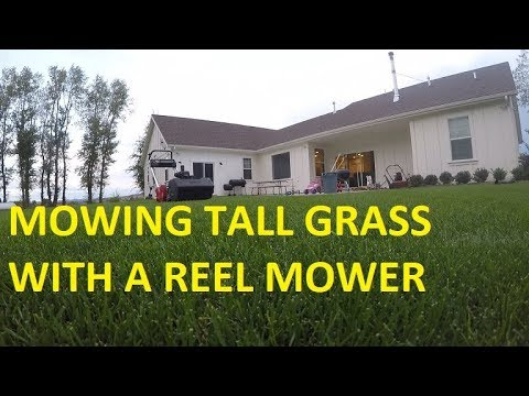 Mowing tall grass with a REEL MOWER  What happens