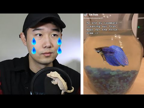 How to do PROPER Betta Fish Water Changes (TikTok) | Fish Tank Review 99