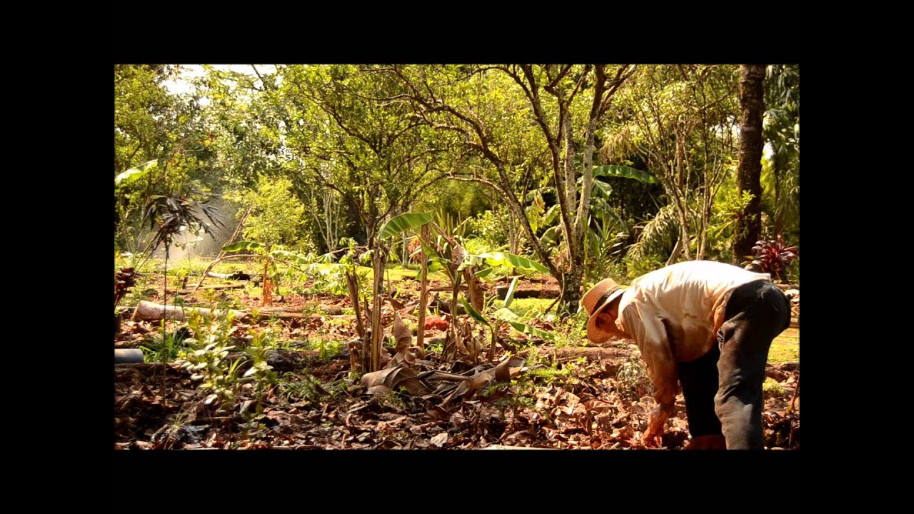 A tropical forest garden 2.wmv - YouTube