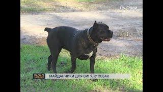 У Сумах планують встановити майданчики для вигулу собак