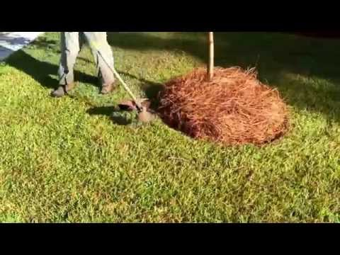 How To Edge Long Needle Pine Straw With A String Trimmer