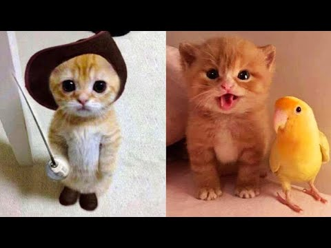 Baby Cats - Cute and Funny Cat Videos Compilation #20 | Aww Animals