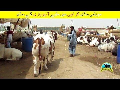 80 | Cow Mandi 2018 Karachi Sohrab Goth | Video in Urdu/Hindi | Cow Mandi Tutorial