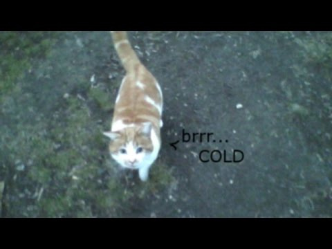 Outyard Exploration - It's Cold