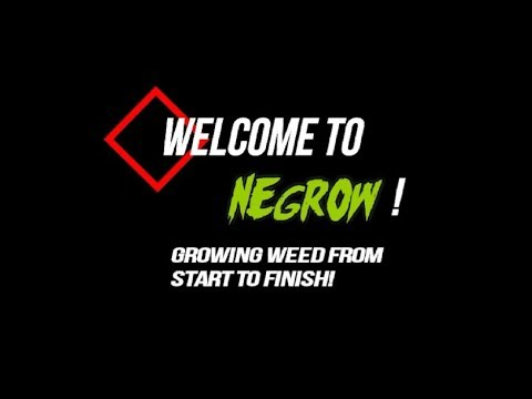 How To Grow Weed Easily From Start to Finish | NE Grow 2019