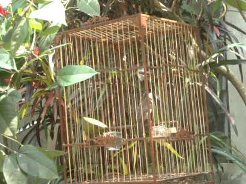 chao mao hue MS 01 (có tại: http://longchimhue.vn)