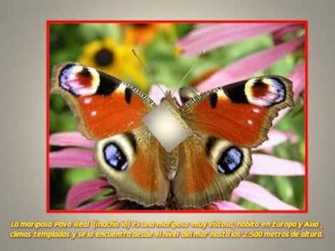 Las 12 Mariposas Más Fascinantes Del Mundo Youtube
