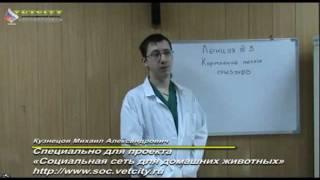 Ветеринария - Кормление мелких грызунов