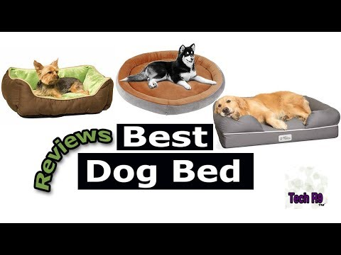 top-10-best-dog-bed-reviews-in-2019-|-the-r9