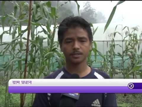 Mere Desh Ki Dharati: Organic farming in Sikkim