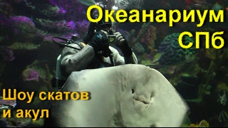 Океанариум. Шоу со скатом и акулами