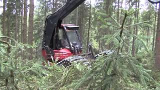 Starkholzernte über Naturverjüngung