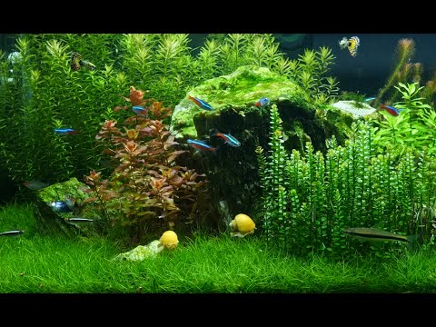 Tropical Meditation Aquarium 1 hour relaxing music ambiance